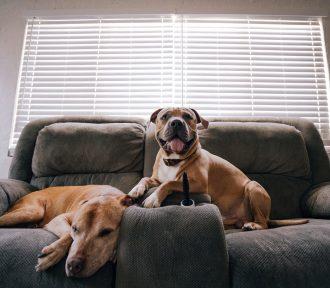 Should Freelancers Get a Dog?